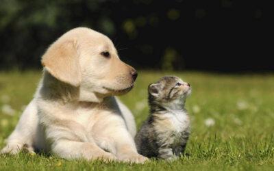 Soplo de Vida, una fundación en Buenos Aires que ayuda a los animalitos en situaciones de riesgo